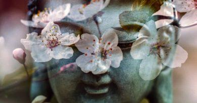Rapporto tra i fiori di Bach e i chakra