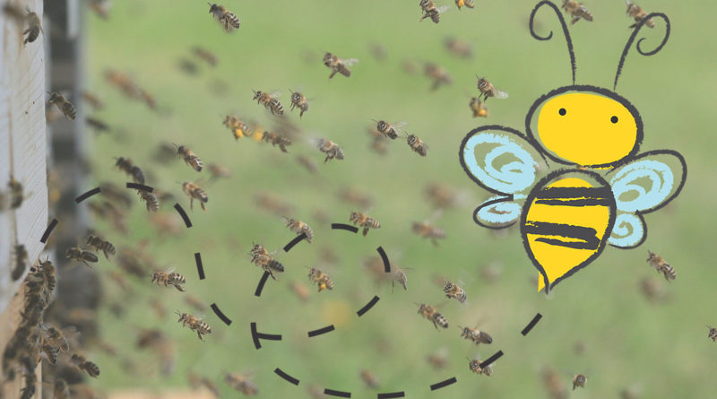 L'ape, maestra di scienze naturali
